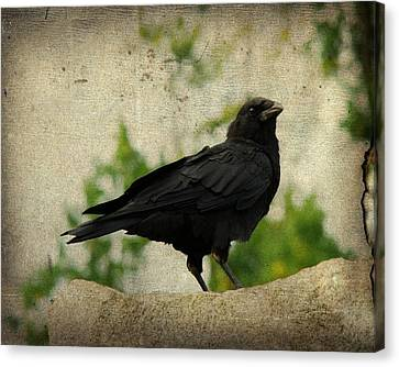 Blackbird Is Taking It All In Canvas Print by Gothicrow Images
