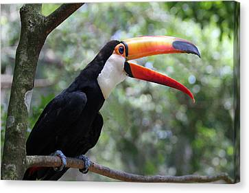 Talkative Toucan Canvas Print