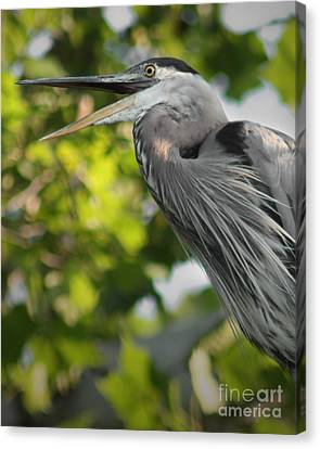 Canvas Print featuring the photograph Talking Heron by Anita Oakley