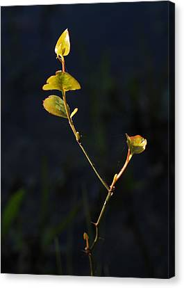 Canvas Print featuring the photograph Tall And Proud by Susan D Moody