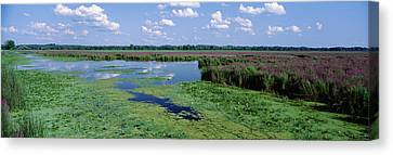 Tall Grass In A Lake, Finger Lakes Canvas Print by Panoramic Images