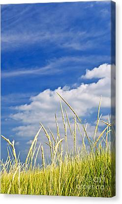 Tall Grass On Sand Dunes Canvas Print