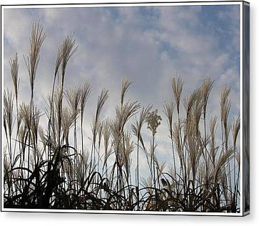 Tall Grasses And Blue Skies Canvas Print