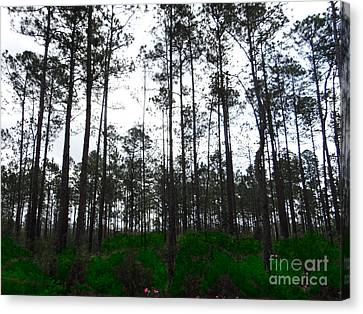 Tall Tree Forest Canvas Print by Ecinja Art Works