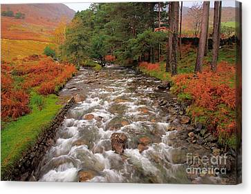 Tall Trees And Rushing Water Canvas Print by Wobblymol Davis