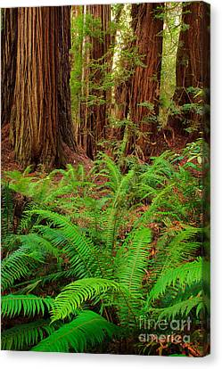 Tall Trees Grove Canvas Print by Inge Johnsson