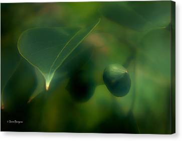 Canvas Print featuring the photograph Tallow Tree by Travis Burgess