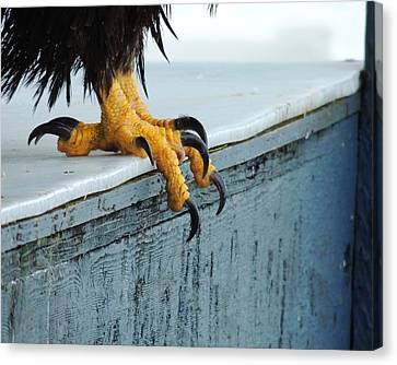 Canvas Print featuring the photograph Talons by Karen Horn
