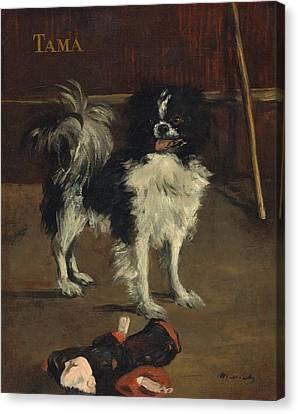 Tama - The Japanese Dog Canvas Print