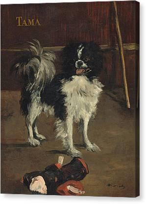 Tama The Japanese Dog Canvas Print