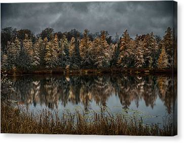 Tamarack Reflections Canvas Print by Paul Freidlund