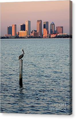 Tampa Skyline And Pelican Canvas Print by Carol Groenen