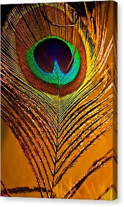 Tan Feather Canvas Print