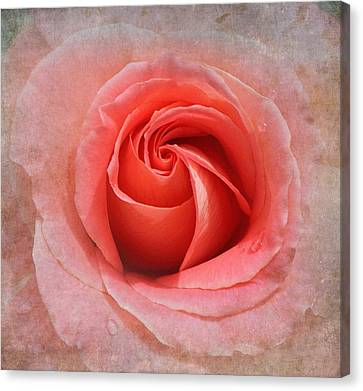 Tangerine Delight Canvas Print by Angie Vogel