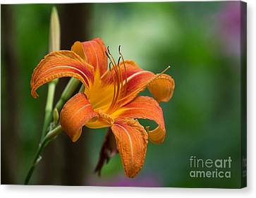 Tangerine For A Day Canvas Print by Deborah Scannell