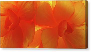 Tangerine Canvas Print by Tom Druin