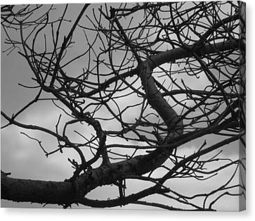 Tangled By The Wind Canvas Print