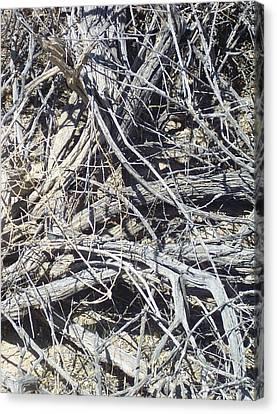 Tangled Desert Cedar  Canvas Print by The GYPSY And DEBBIE