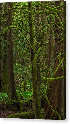 Canvas Print featuring the photograph Tangled Forest by Jacqui Boonstra