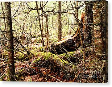 Tangled Forest Canvas Print by Larry Ricker