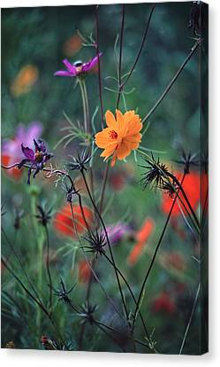 Tangles - A Dance Of Flowers And Weeds Canvas Print by Michael Flood