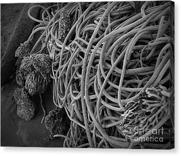 Tangles Of Seaweed 2 Bw Canvas Print by Chalet Roome-Rigdon