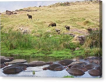 Tanzania, Ngorongoro Conservation Area Canvas Print by Jaynes Gallery