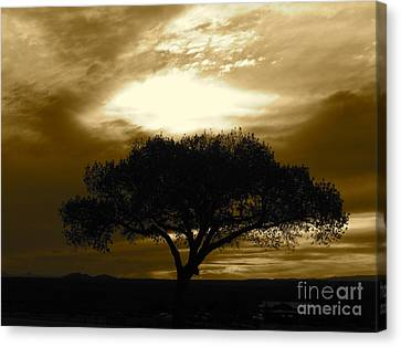 Taos Tree Canvas Print