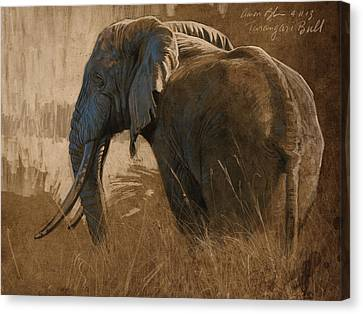 Tarangire Bull Canvas Print