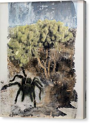 Tarantula Canvas Print by Frederick Fulmer