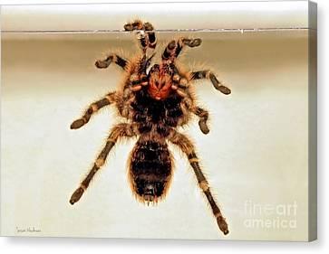 Canvas Print featuring the photograph Tarantula Hanging On Glass by Susan Wiedmann