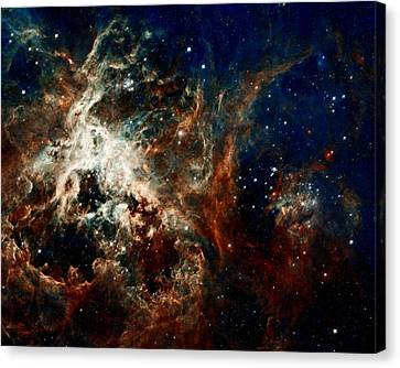 Tarantula Nebula Canvas Print by Amanda Struz