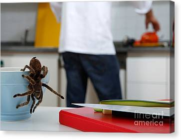 Tarantula Trying To Escape Canvas Print by Emilio Scoti