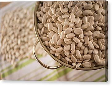 Tarbais Beans In A Colander Canvas Print