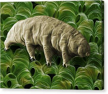 Tardigrade Or Water Bear Canvas Print by Science Photo Library