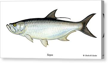 Tarpon Canvas Print by Charles Harden