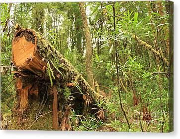 Tasmanian Rain Forest All Profits Go To Hospice Of The Calumet Area Canvas Print