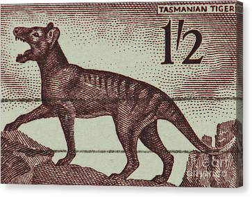 Tasmanian Tiger Vintage Postage Stamp Canvas Print by Andy Prendy
