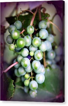 Virginia Wine Canvas Print - Taste Of Nature by Karen Wiles