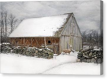 Taste Of Winter Canvas Print by Robin-Lee Vieira