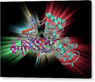 Tata Box-binding Protein Complex Canvas Print by Laguna Design