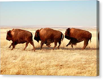Moving Canvas Print - Tatanka by Todd Klassy