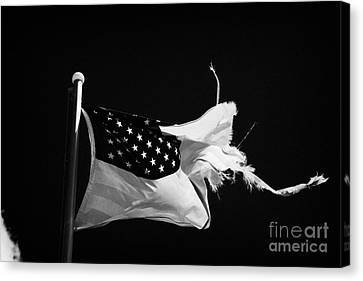 Tattered Torn Worn Us Flag Flying From Flagpole Canvas Print by Joe Fox