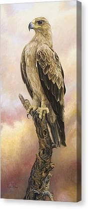 Tawny Eagle Canvas Print by Lucie Bilodeau