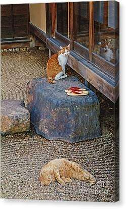 Tea Cats Canvas Print by Danilo Piccioni