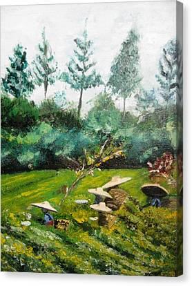 Tea Plantation In Indonesia Canvas Print