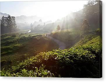 Tea Plantations And Road, Munnar Canvas Print by Peter Adams