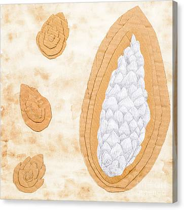 Cardboard Canvas Print - Tea Stained Pine Cones by Amanda Elwell