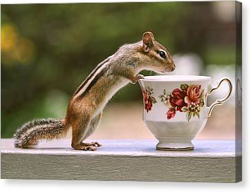 Tea Time With Chipmunk Canvas Print