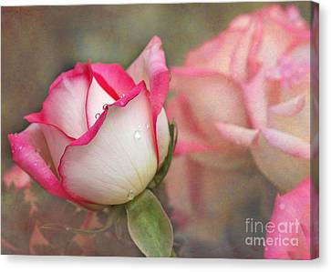 Florida Flowers Canvas Print - Tears In The Garden by Sabrina L Ryan